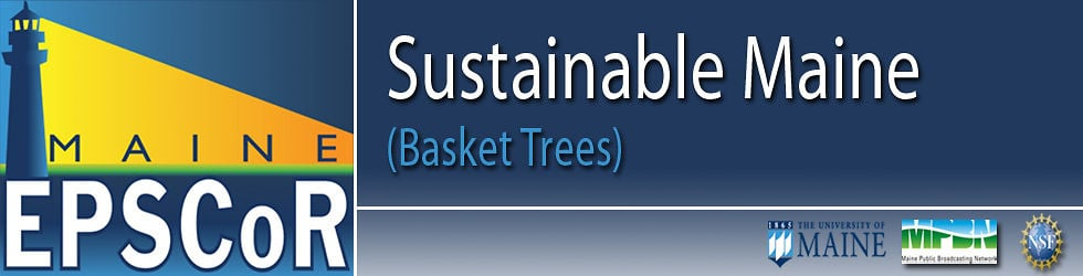 SUSTAINABLE MAINE: Basket Trees