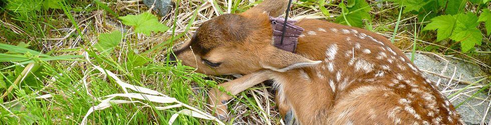 Alaska: Nature's Labratory