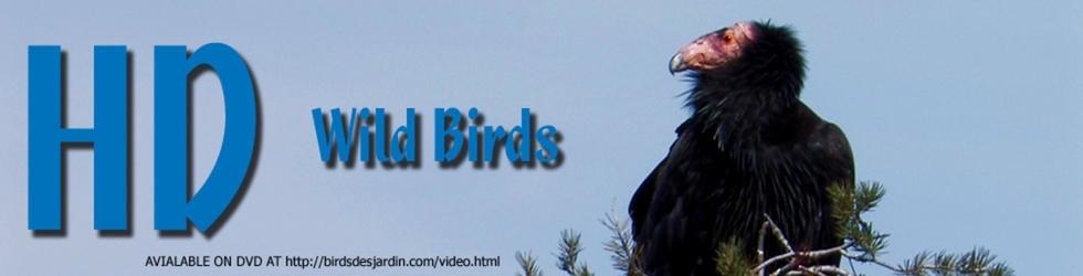 HD WILD BIRDS