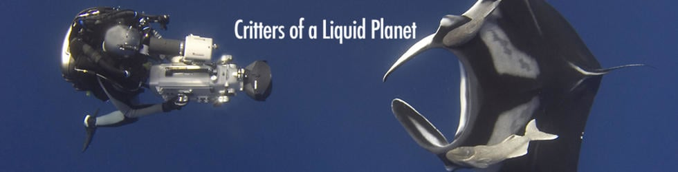 Critters of a Liquid Planet