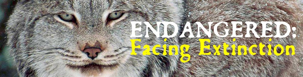 Endangered : Facing Extinction