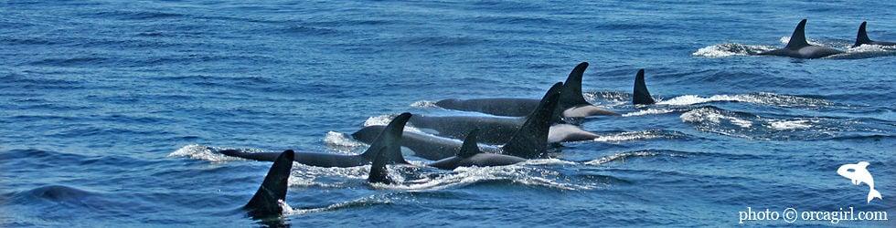 Cetaceans (Whales & Dolphins)