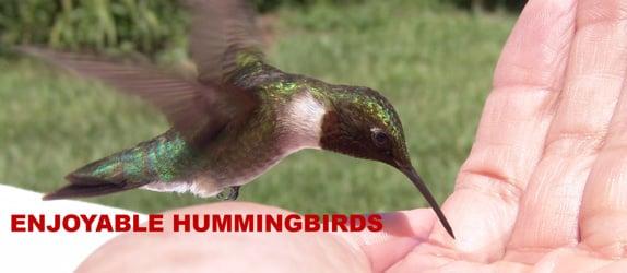 Enjoyable Hummingbirds