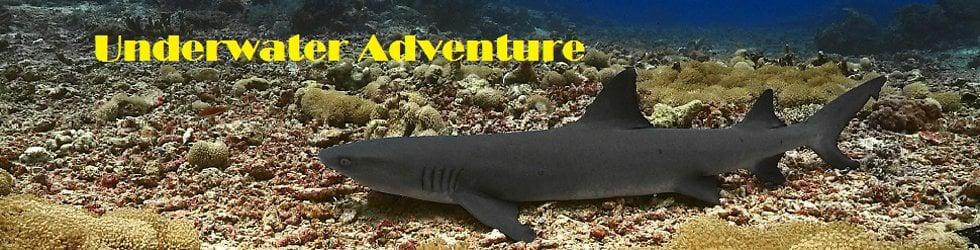 Underwater Adventures.