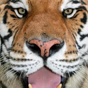 Profile picture for Big Cat Rescue