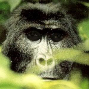 Profile picture for Lapo