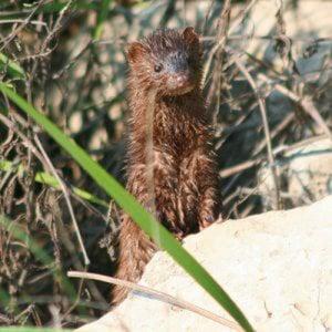 Profile picture for andersfornelius