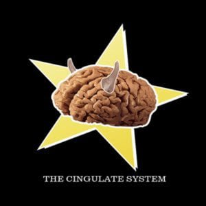 Profile picture for The Cingulate System