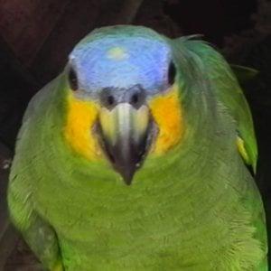 Profile picture for Guilherme Britto Fernandes