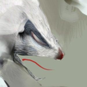 Profile picture for schwendigo