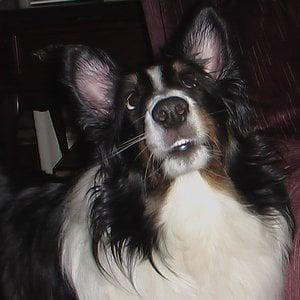 Profile picture for colt68