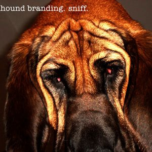 Profile picture for Bloodhound Branding
