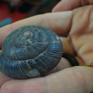 Profile picture for vainilla con canela