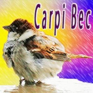 Profile picture for Carpi Bec