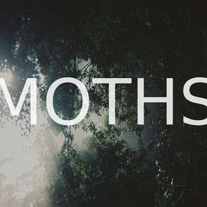 Profile picture for Moths