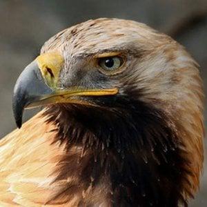 Profile picture for Mr. Enrich