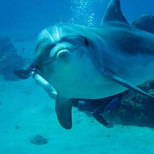 Profile picture for La Dolphin Connection