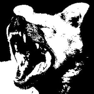Profile picture for Animals of Combat