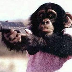 Profile picture for Sad Monkey