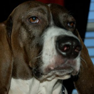 Profile picture for Dog Boner