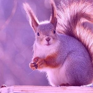 Profile picture for pink squirrel