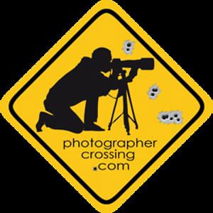 Profile picture for photographercrossing