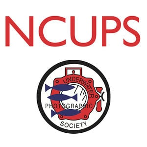 Profile picture for NCUPS
