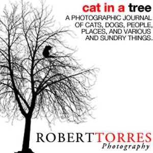 Profile picture for Robert Torres