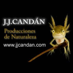 Profile picture for JJCANDAN PRODUCCIONES