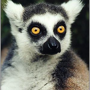 Profile picture for Lemurat