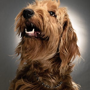 Profile picture for matt buedel