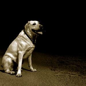 Profile picture for Adolfo Maeso