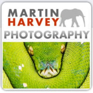 Profile picture for Martin Harvey