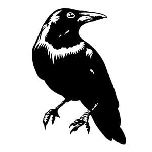 Profile picture for Blackbird™