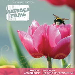 Profile picture for Matraca Films