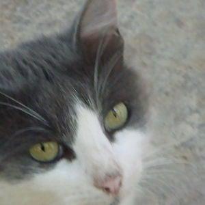 Profile picture for seraphin
