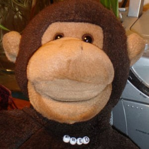 Profile picture for Fred Chimp