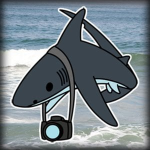 Profile picture for thesteelshark