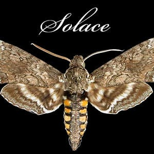 Profile picture for Solace Moth