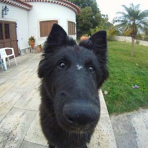 Profile picture for Rafa Fidalgo