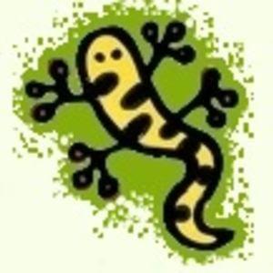 Profile picture for salamandreta