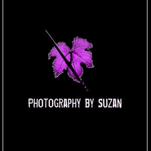Profile picture for Suzan Kirsic