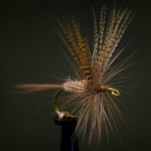 Profile picture for Shannon's Fly and Tackle