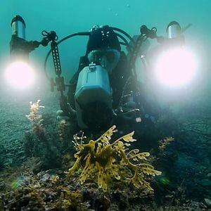 Profile picture for Seadragon Films