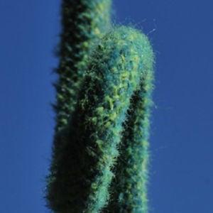 Profile picture for eldelbin