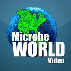 Profile picture for microbeworld