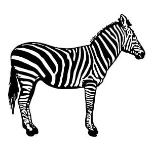 Profile picture for ZEBRA Concepte Audiovisual