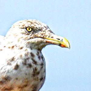 Profile picture for JPartington