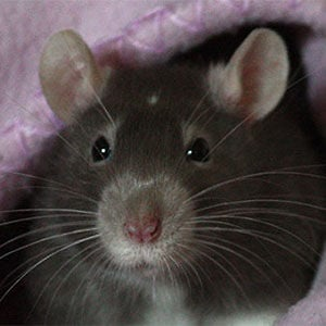 Profile picture for 28rats.com