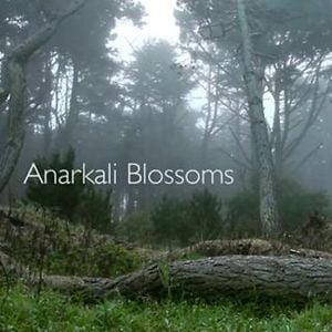 Profile picture for Anarkali Blossoms